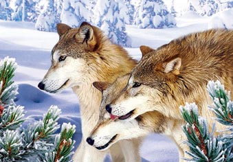 wild wolves in the snow 3d animal wall decor picture crystal gifts